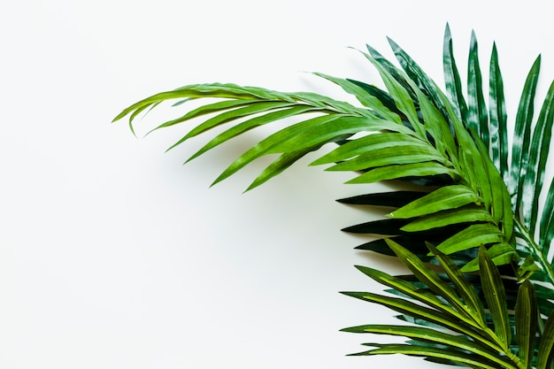Fresh green palm leaves isolated on white background Free Photo