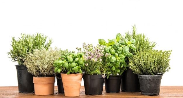 白い背景の上の新鮮な緑の鉢植えなハーブ Premium写真