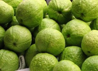 Fresh guavas Free Photo