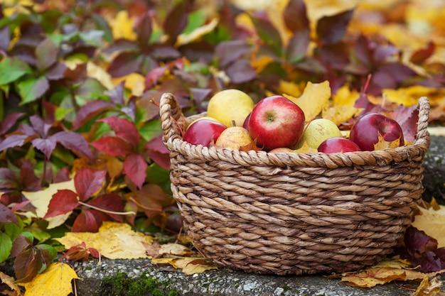 りんごの新鮮な収穫。秋のガーデニング。感謝祭の日。かごの中の有機赤りんご Premium写真