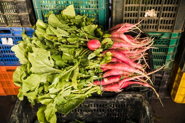 Fresh harvested red radish in plastic crate at supermarket Free Photo