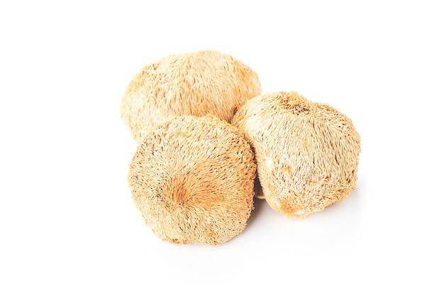 Fresh hericium erinaceus on white Premium Photo