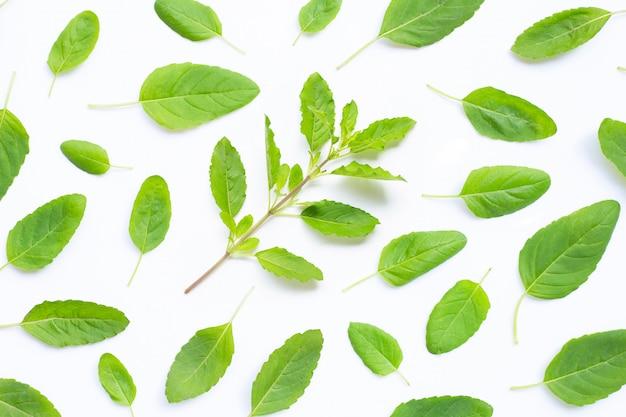 Fresh holy basil leaves on white Premium Photo