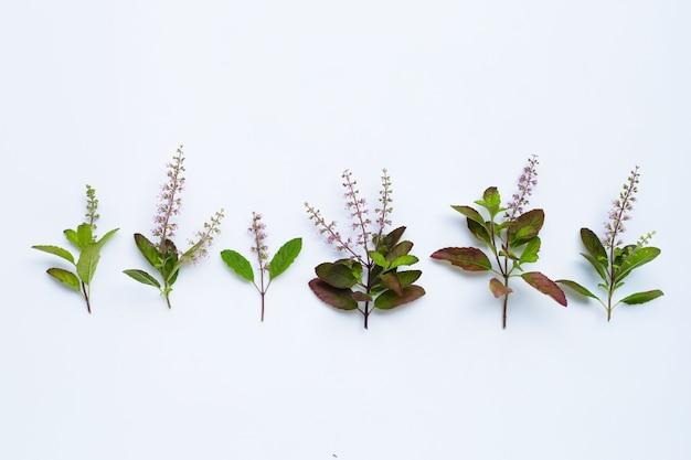 Свежие листья базилика с цветком на белом фоне Premium Фотографии