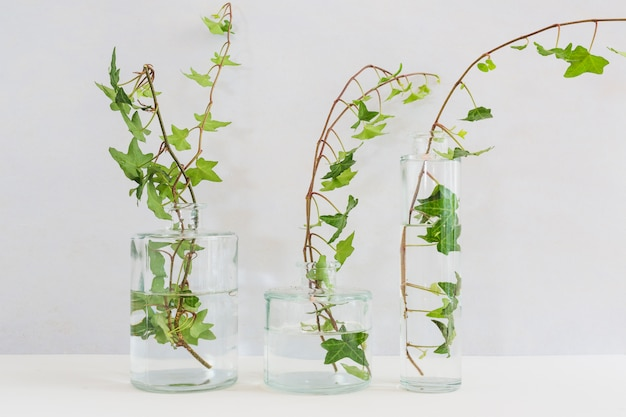 Fresh ivy twigs in the different type of glass vase on table Free Photo