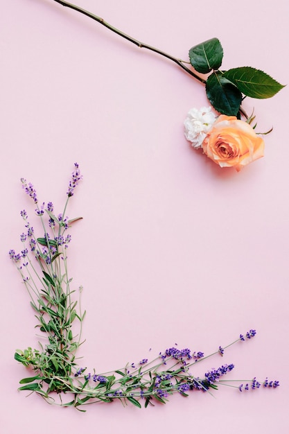 Fresh lavender flowers and rose on pink background Free Photo