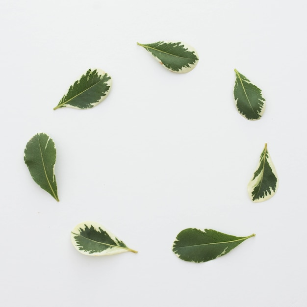 Fresh leaves arranged in circular frame over white surface Free Photo