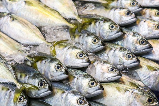Fresh mackerel is placed in a row on the refrigerated panel Premium Photo