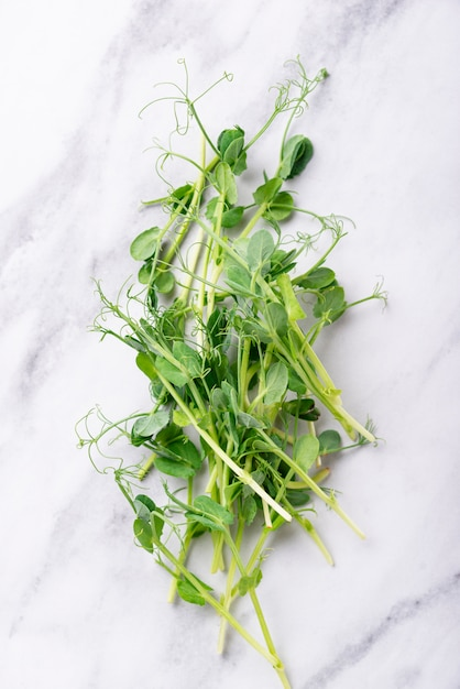 Fresh micro greens peas sprouts Premium Photo