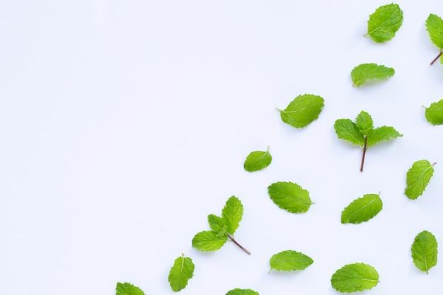 Fresh mint leaves. copy space Premium Photo