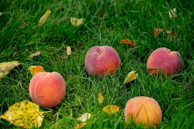 庭の緑の芝生に新鮮なネクタリン桃 Premium写真