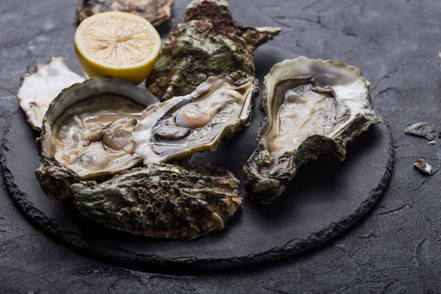 Fresh open oysters with paw of a black cat. healthy sea food. dinner in restaurant. gourmet food. dark surface Premium Photo