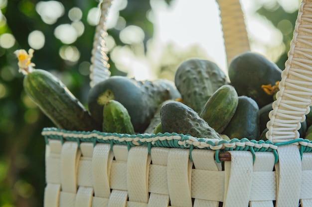 庭の木製のテーブルの[バスケットに新鮮な有機きゅうり。サラダに野菜を健康的に食べる。豊作。閉じる。 Premium写真