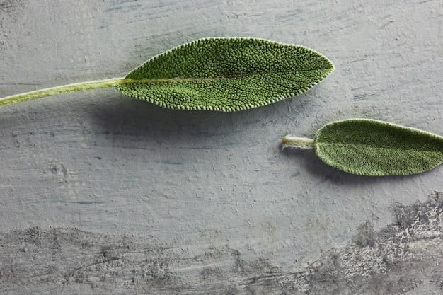灰色のテーブルの上の新鮮な有機セージの葉 無料写真