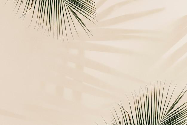 베이지 색에 신선한 야 자 잎 무료 사진
