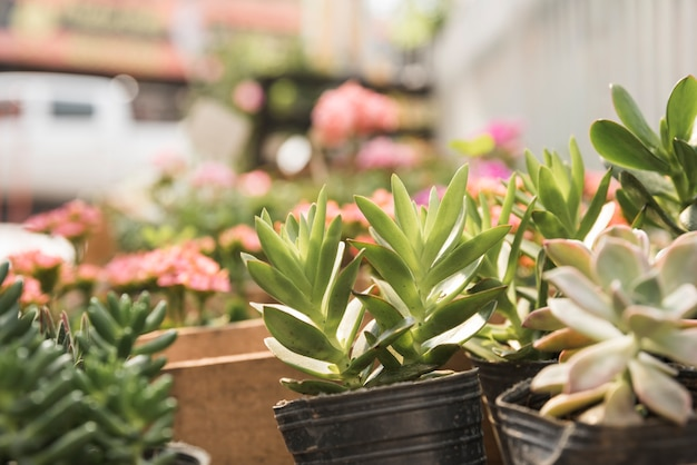 Fresh potted succulent plants Free Photo