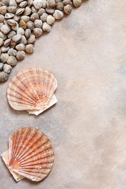 Свежие сырые раковины моллюсков и морской гребешок. Premium Фотографии
