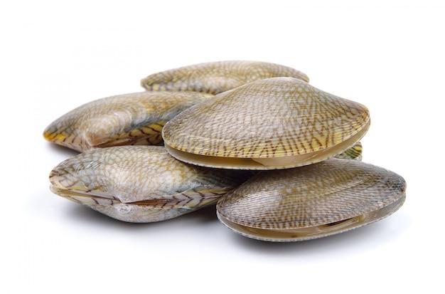 Fresh raw surf clam on a white surface Premium Photo