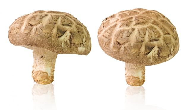 Fresh shiitake mushrooms isolated on white Premium Photo