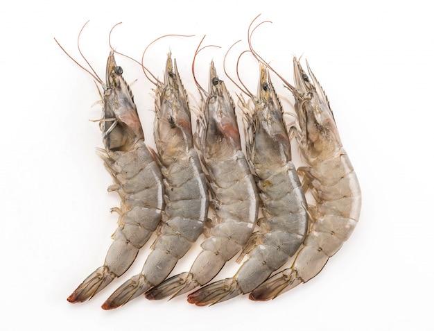 Fresh shrimp/prawn Free Photo