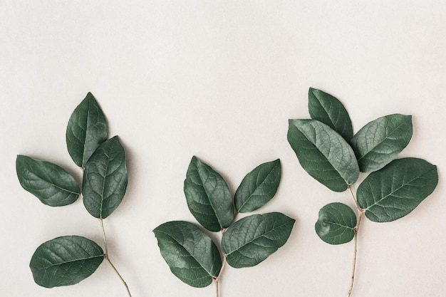 Fresh small branches with green leaves Premium Photo