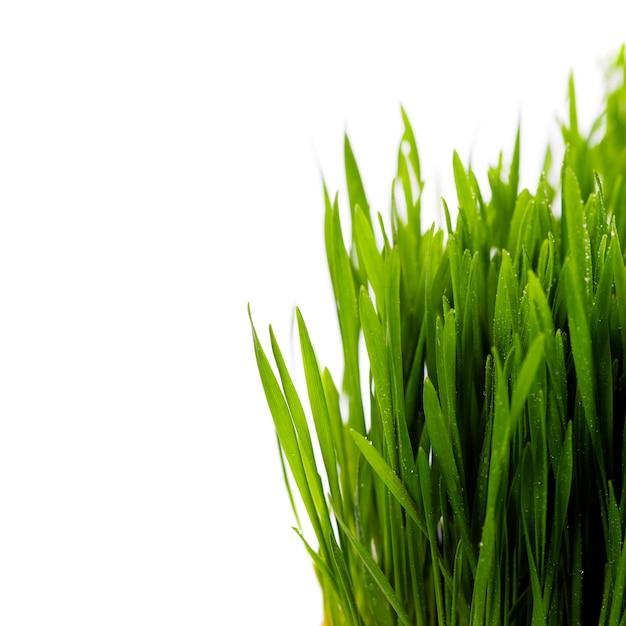 Свежая весенняя зеленая трава над белой Premium Фотографии