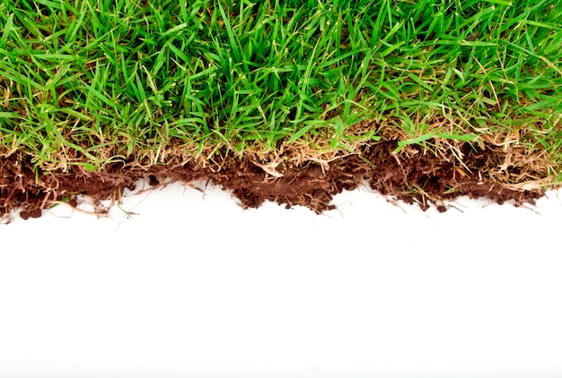 Fresh spring green grass with soil isolated on white background. Free Photo