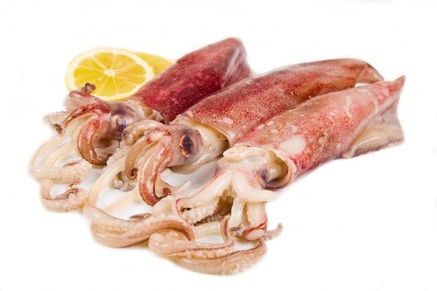 Fresh squid isolated Premium Photo