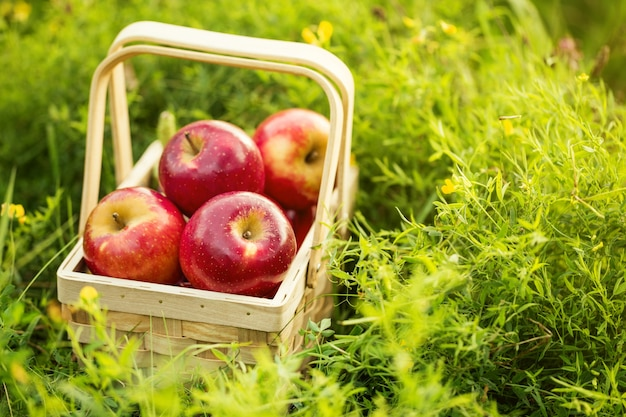 Fresh Tasty Red Apples in Wooden Basket on Green Grass Free Photo