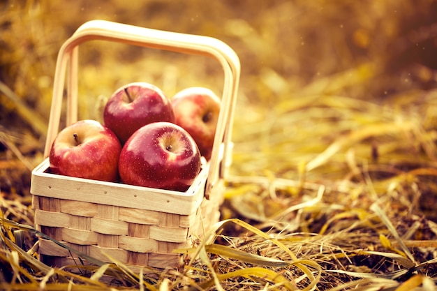 Fresh Tasty Red Apples in Wooden Basket on Red Autumn Background Free Photo