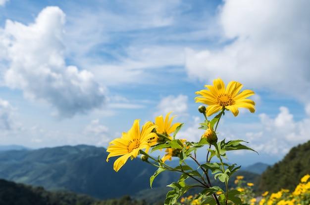 Fresh tree marigold (mexican sunflower). Premium Photo