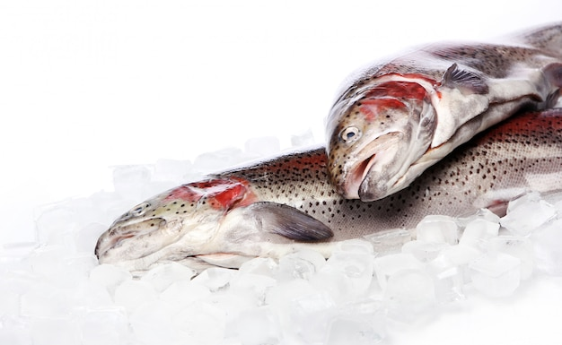 Fresh trout on ice isolated on white Free Photo
