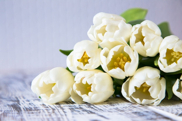Fresh white tulips on light background. selective focus Premium Photo