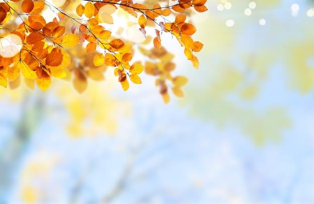 Свежая желтая листва клена падает на бледное облачное небо Premium Фотографии