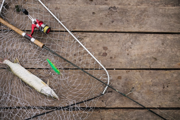 Freshly caught fish inside the fishing net with fishing rod Free Photo