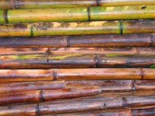Freshly Cut Bamboo Poles Free Photo