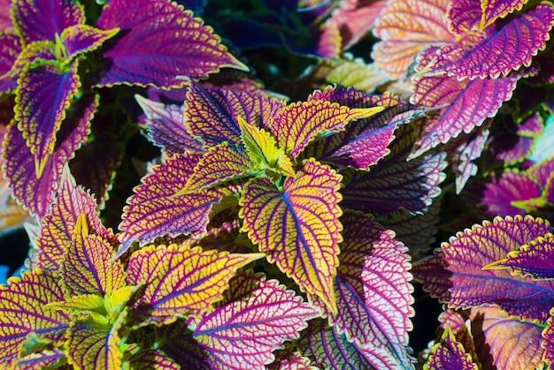 From colorful leaves, a beautiful plant Premium Photo