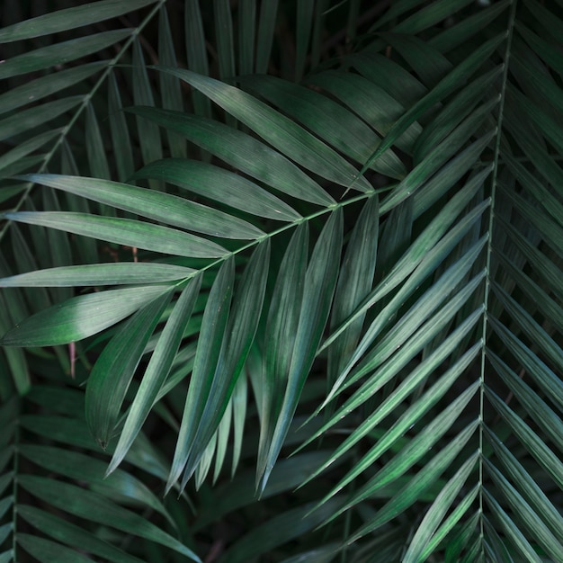 From above green palm leaves Free Photo