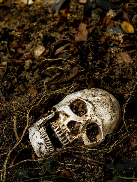 In front of human skull buried in the soil with the roots of the tree on the side. Premium Photo