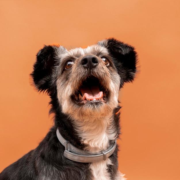Vista frontale dell'adorabile cucciolo di razza mista con la bocca spalancata Foto Gratuite