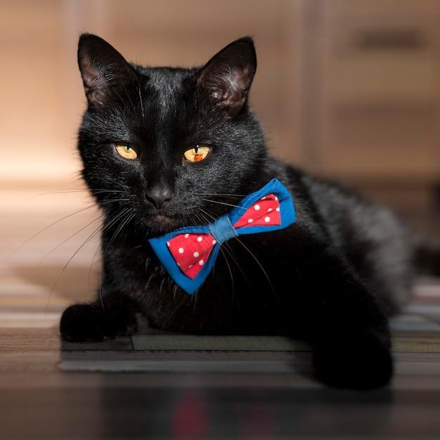 Vista frontale del bellissimo gatto nero con farfallino Foto Gratuite