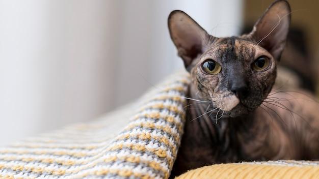 Vista frontale del bellissimo concetto di gatto Foto Gratuite