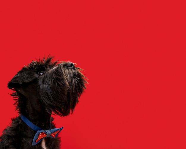 Vista frontale del bellissimo cane con copia spazio Foto Gratuite