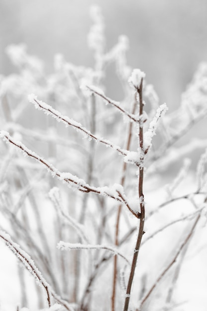 Front view branch of tree with snow Free Photo