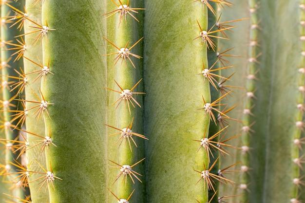 Front view of cactus plant Premium Photo