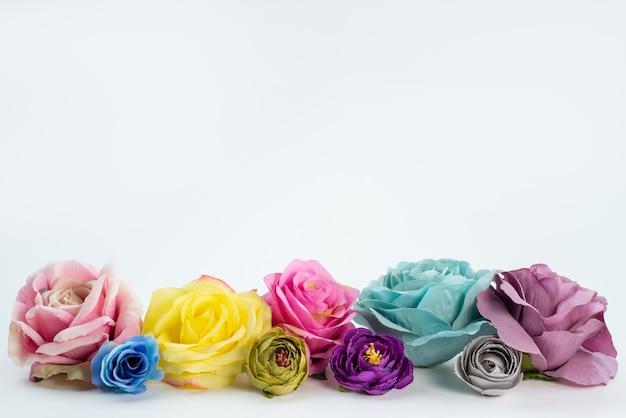 Una vista frontale rose colorate fiori belli ed eleganti su bianco, pianta fiore di colore Foto Gratuite