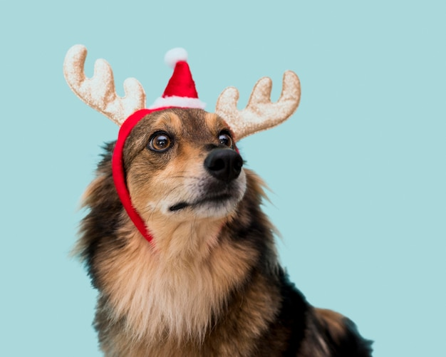 Front view of cute dog with christmas concept Free Photo