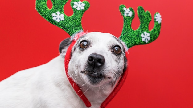 Vista frontale del simpatico cane con il concetto di natale Foto Gratuite