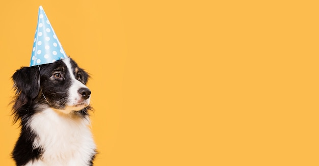 Front view cute dog with copy space Free Photo