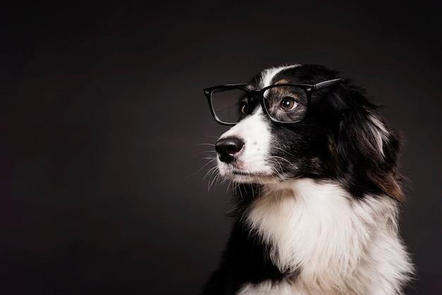 Вид спереди милая собака в очках Premium Фотографии